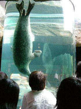 旭山動物園_e0012815_21533685.jpg