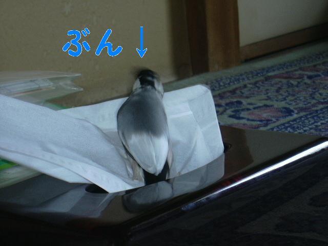 d0039036_22194790.jpg