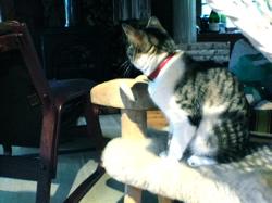 猫とヒツジ_d0028589_21132023.jpg