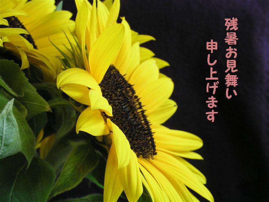 b0005390_195197.jpg