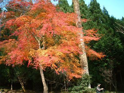 京の秋~_e0046428_15592325.jpg