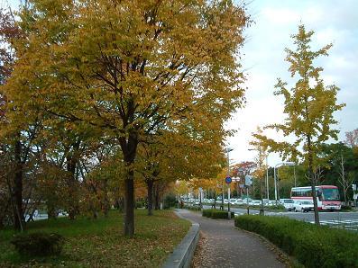 京の秋~_e0046428_15593052.jpg