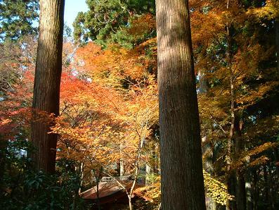京の秋~_e0046428_160152.jpg