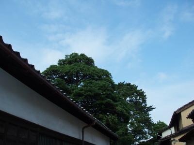 b0026230_1375212.jpg