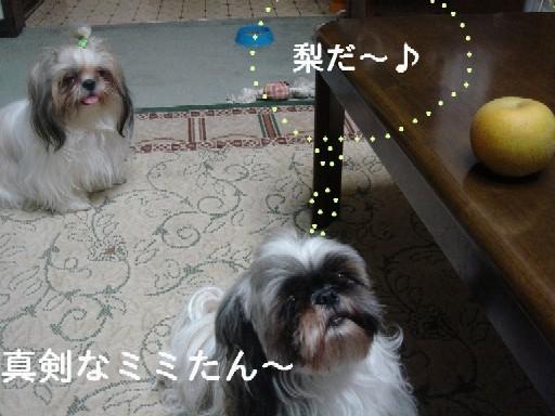 c0038983_1228320.jpg
