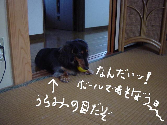 c0058727_159976.jpg