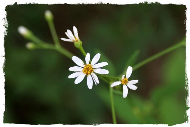花だより XVIII_d0012134_23501165.jpg