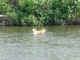 川で遊んだよ~!_e0023790_15313826.jpg