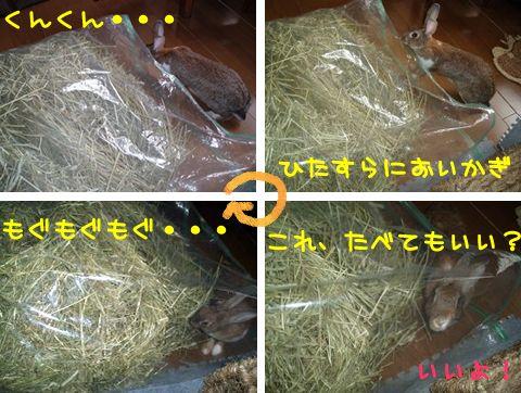 b0030701_16441320.jpg