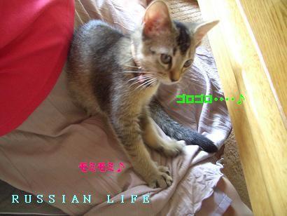 d0045408_2005468.jpg