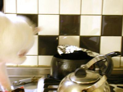 化け猫=ヨウカン 油をなめる!_a0028451_12272076.jpg