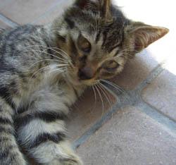 猫くらべ_d0000995_1021521.jpg