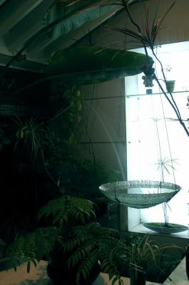 涼しさを演出 ガラスの水盤_e0010418_13574958.jpg