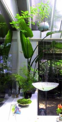 涼しさを演出 ガラスの水盤_e0010418_1482710.jpg