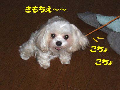 b0060071_3413859.jpg