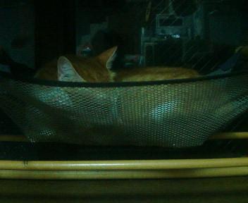 Cat in the net (nest)_b0019333_23372348.jpg