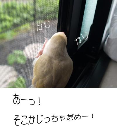 d0010868_20123626.jpg