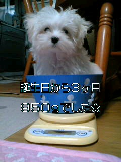 e0045001_19195548.jpg