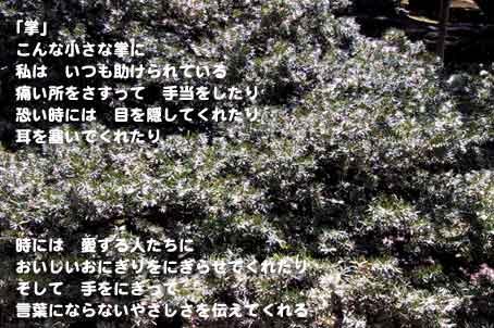 b0044724_11261963.jpg