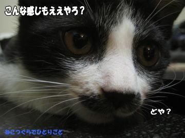 b0041182_003143.jpg