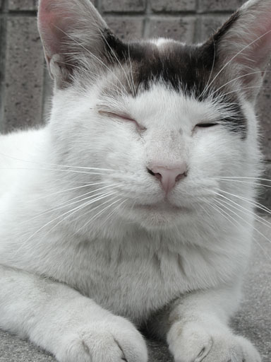 猫のポーズ「むしゅっ!」_e0015690_23362974.jpg