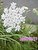 a0035108_188498.jpg