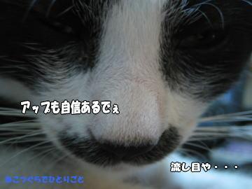 b0041182_014382.jpg