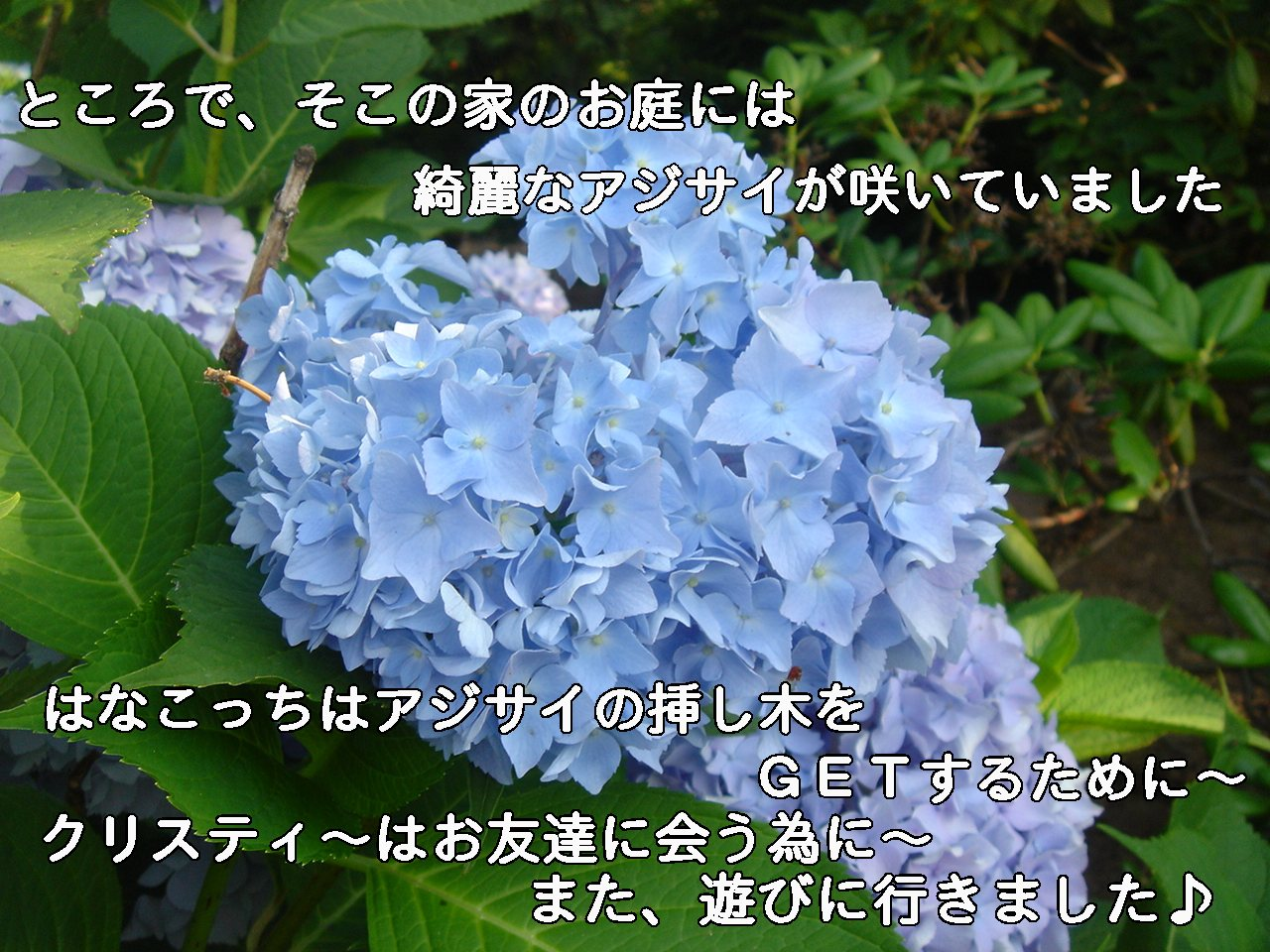c0038983_72979.jpg