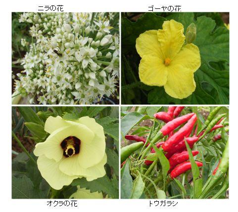 今時の農園_c0051105_22522598.jpg