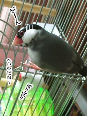 b0014157_20115097.jpg