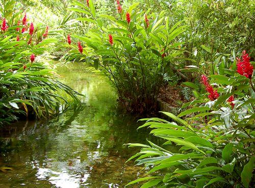 赤い花が咲く小川_e0053660_784870.jpg