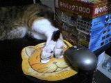 ハサマル猫_a0021476_0365254.jpg