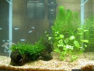熱帯魚_d0005380_14135945.jpg
