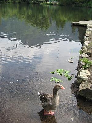 残夏の湯布院・・・金鱗湖_c0001578_2210162.jpg