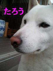 e0056400_16495149.jpg