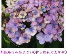e0043051_1934128.jpg