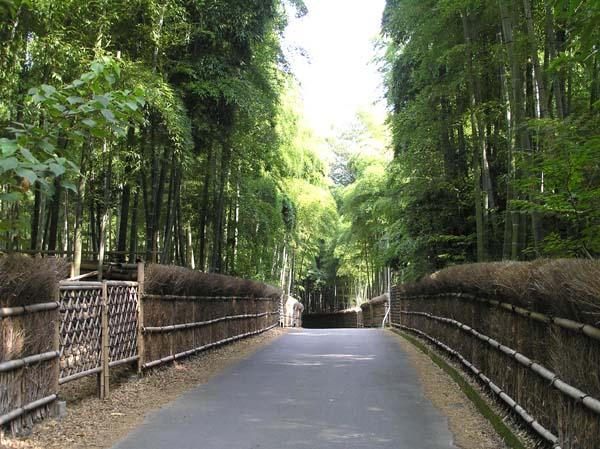 竹林公園1_e0048413_2127582.jpg