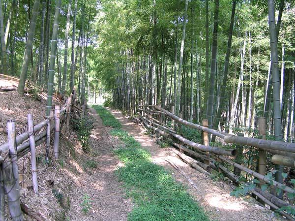 竹林公園1_e0048413_21275958.jpg