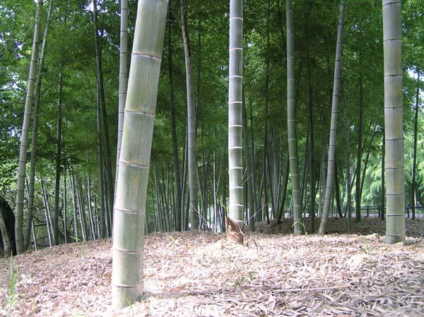 竹林公園2_e0048413_21374491.jpg
