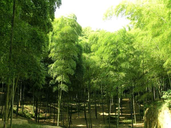 竹林公園2_e0048413_2138384.jpg