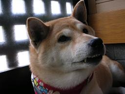 愛犬家バトン_c0049950_2316752.jpg