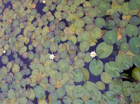38年ぶりの尾瀬はススキが穂を出して早、秋景色に!_c0014967_22162545.jpg