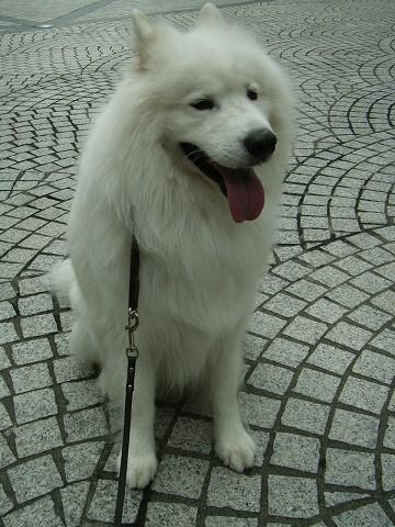 犬のような天気=ひどい天気_c0062832_11404154.jpg