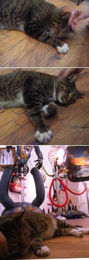 猫の住むギャラリー Fusion Arts Museum_b0007805_1171796.jpg