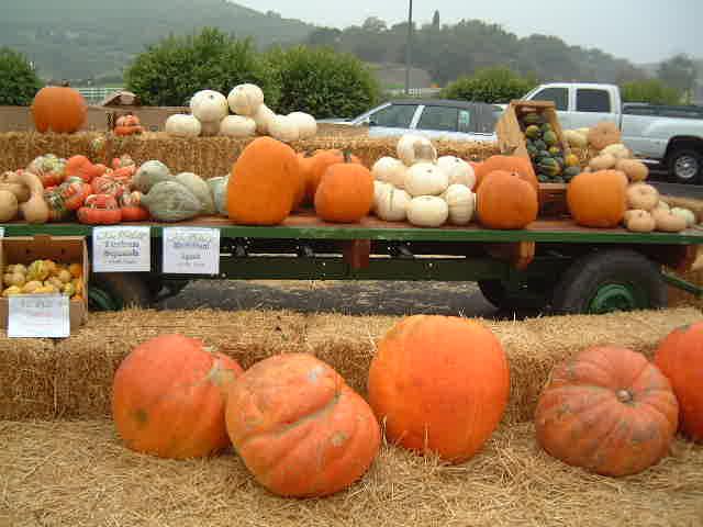 Pumpkin  _e0042839_1638010.jpg
