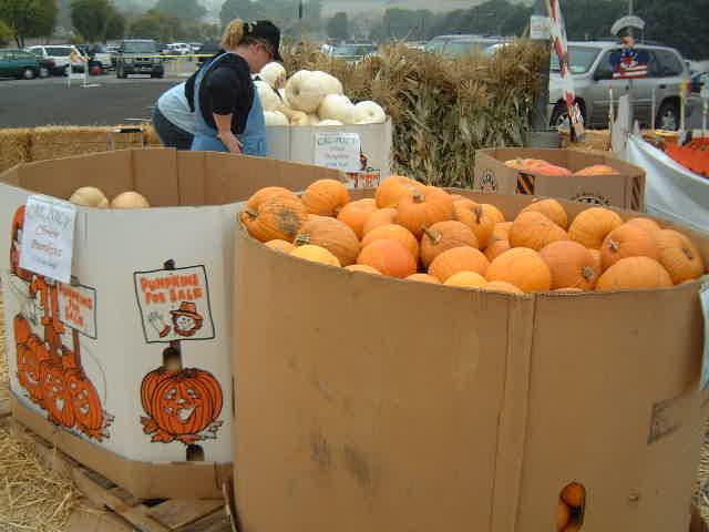 Pumpkin  _e0042839_163881.jpg
