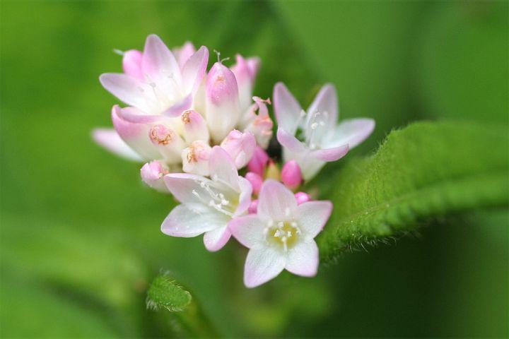 花だより XIX_d0012134_23362632.jpg