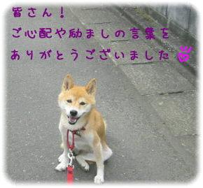 c0006757_86412.jpg