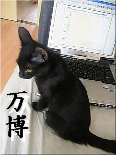 黒みつはパソコンが好きです、ほんの暇つぶしらしいですが…(本猫談)