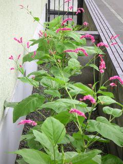 9月の庭_c0025115_14542684.jpg